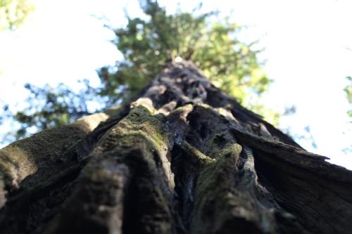 11_trees