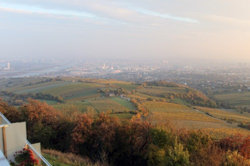 View_kahlenberg_night