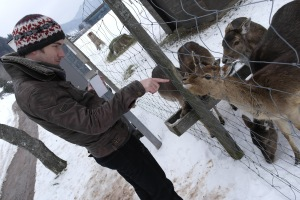 Feeding deer in Menzenschwand