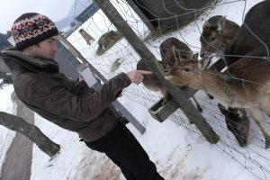 Feeding deer in Menzenschwand