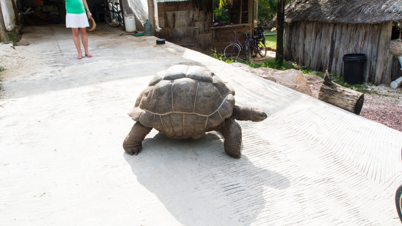 Tortoise blocking the road